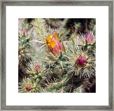 Cactus 17 Framed Print