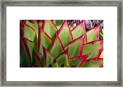 Cactus 3 Framed Print