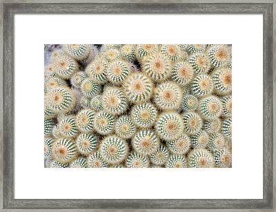 Cactus 35 Framed Print