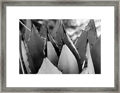 Cactus 5 Framed Print