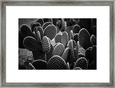 Cactus 5252 Framed Print by Timothy Bischoff