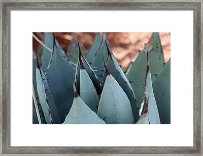 Cactus 6 Framed Print