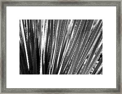Cactus 7 Framed Print