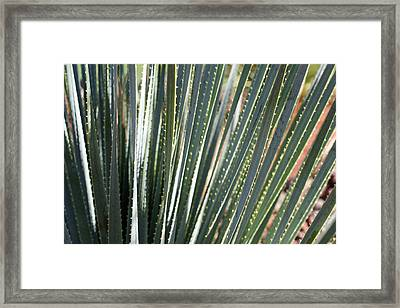 Cactus 8 Framed Print