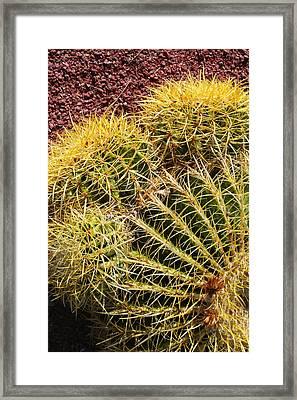 Cactus 9 Framed Print