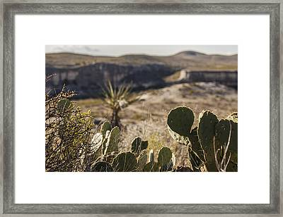 Cactus And Cliffs Framed Print