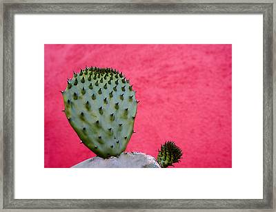 Cactus And Pink Wall Framed Print by Carol Leigh