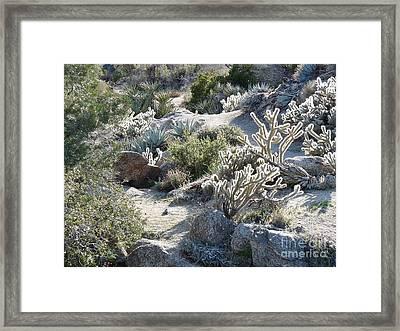 Cactus And Rocks Framed Print by Deborah Smolinske