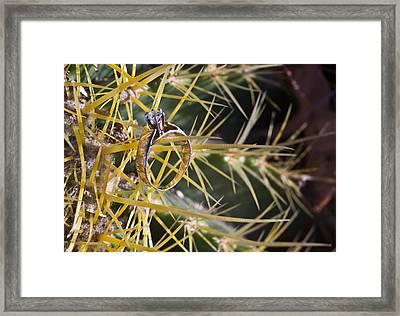 Cactus And Wedding Ring 3 Framed Print by Douglas Barnett