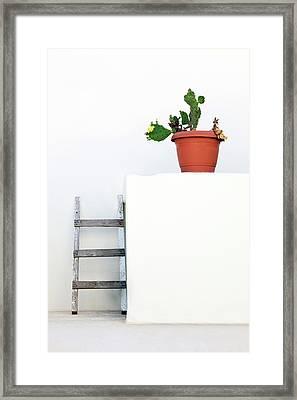 Cactus And White Wall Framed Print by Wladimir Bulgar