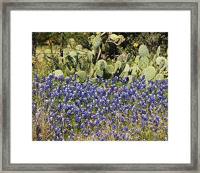 Cactus And Wild Flowers Framed Print