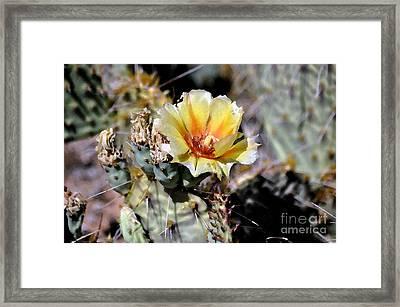Cactus Artwork  Framed Print by Juls Adams