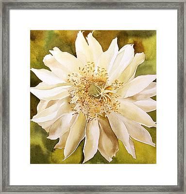Cactus Bloom Framed Print