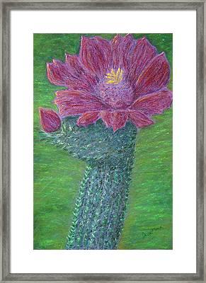 Cactus Bloom Framed Print by Dawn Marie Black