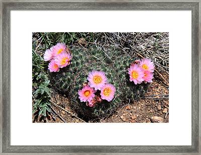 Cactus Blooms Framed Print