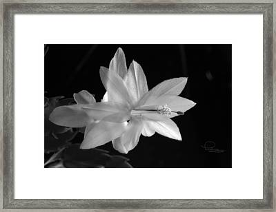 Framed Print featuring the photograph Cactus Blossom by Ludwig Keck