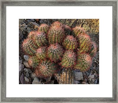 Cactus Burst Framed Print