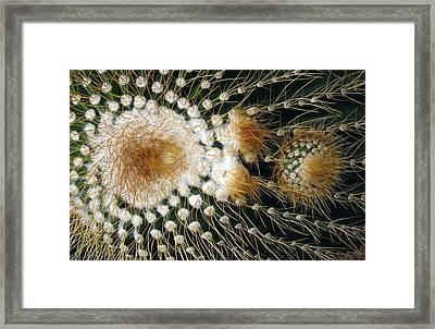 Cactus Close-up Framed Print
