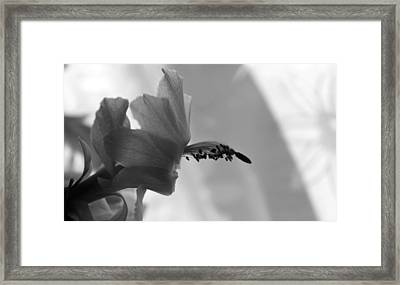 Framed Print featuring the photograph Cactus Dance by Silke Brubaker