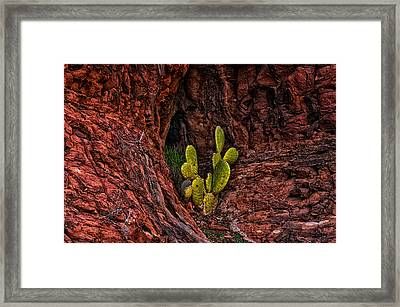 Cactus Dwelling Framed Print by Mark Myhaver