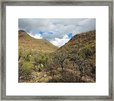 Cactus Everywhere Framed Print
