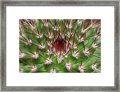 Cactus Facheiroa Ulei Abstract Framed Print by Nigel Downer