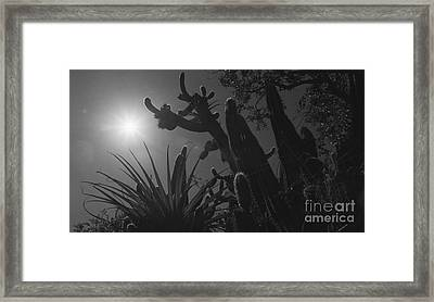 Framed Print featuring the photograph Cactus Family - 2 by Kenny Glotfelty