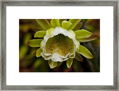 Cactus Flower 1 Framed Print by Sharon Cummings