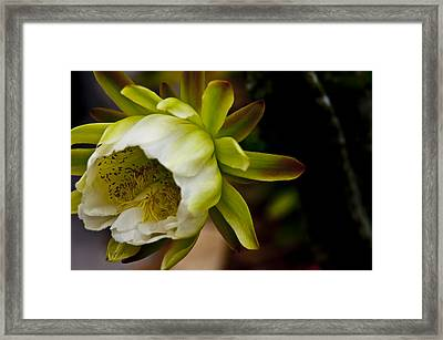 Cactus Flower 3 Framed Print by Sharon Cummings