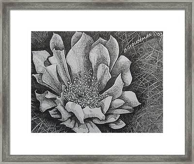 Cactus Flower Framed Print by Denis Gloudeman