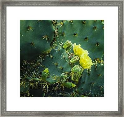 Cactus Flower Framed Print by Jean Noren