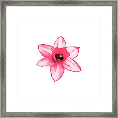 Cactus Flower Pink All The Way Smiles By Navinjoshi  Artist Framed Print by Navin Joshi