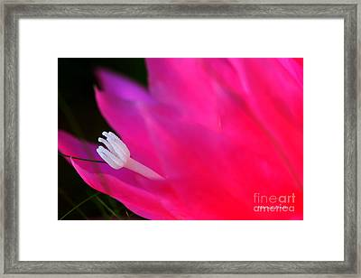 Cactus Flower Summer Bloom Framed Print by Tap On Photo