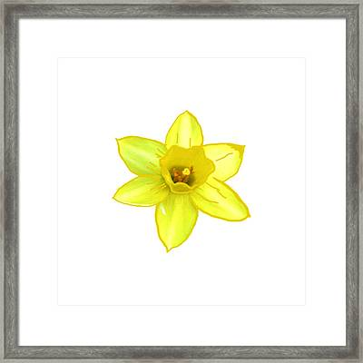 Cactus Flower Yellow  All The Way Smiles By Navinjoshi  Artist Framed Print by Navin Joshi