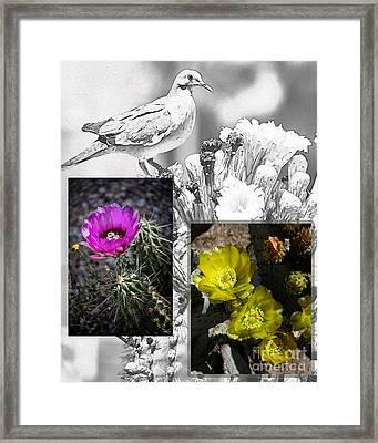 Cactus Flowers 01 Framed Print by David Mendoza