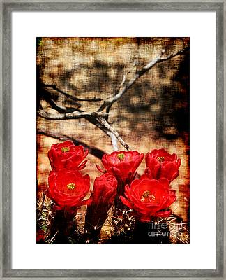 Framed Print featuring the photograph Cactus Flowers 2 by Julie Lueders