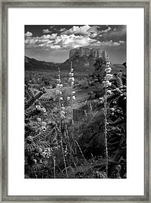 Cactus Flowers And Courthouse Bluff Bw Framed Print