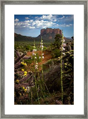 Cactus Flowers And Courthouse Bluff Framed Print