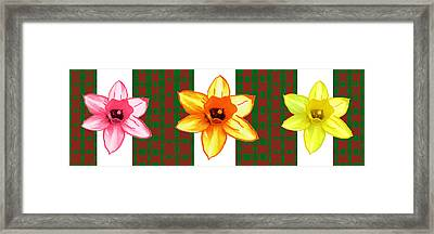 Cactus Flowers By Navinjoshi And An Elegant Decorative Border Base To Focus The Flower Framed Print by Navin Joshi