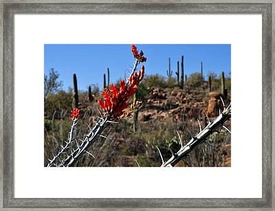 Framed Print featuring the photograph Cactus Flowers by Diane Lent