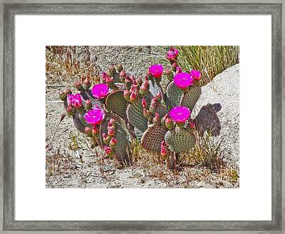 Cactus Flowers Framed Print by Gregory Dyer
