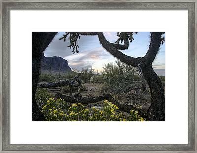 Cactus Framed Sunset Framed Print