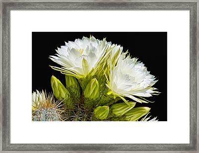 Cactus Glory Framed Print by Kelley King