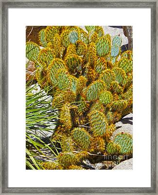 Cactus Framed Print by Gregory Dyer
