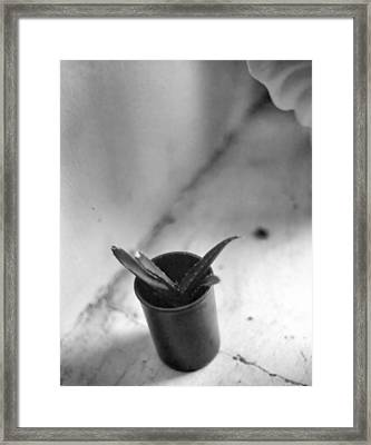 Framed Print featuring the photograph Cactus In A Film Can by Bob Wall