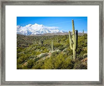 Cactus In Arizona Framed Print