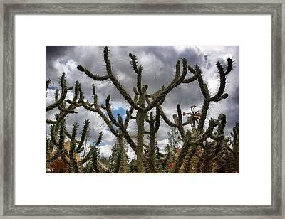 Cactus In Dalat Framed Print by Olga Ivanova
