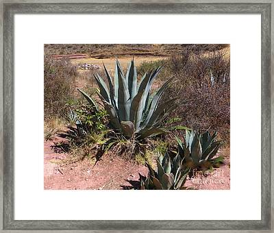 Cactus In Peru Framed Print