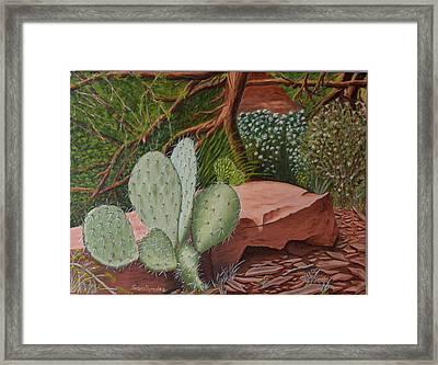 Cactus In Sedona Framed Print