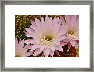 Framed Print featuring the photograph Cactus In The Backyard by Debby Pueschel